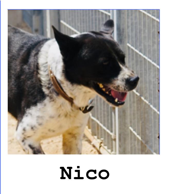 Sponsorship Of Nico For 1 Year