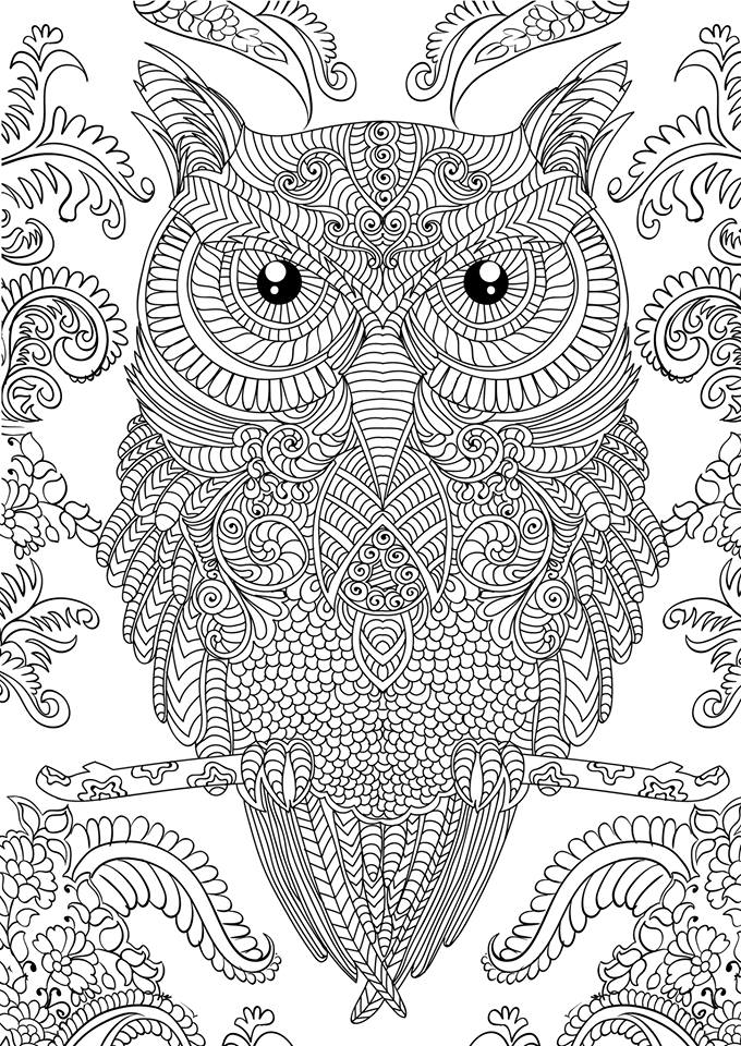 Adult coloring book: 30 owl designs and paisley patterns for ...