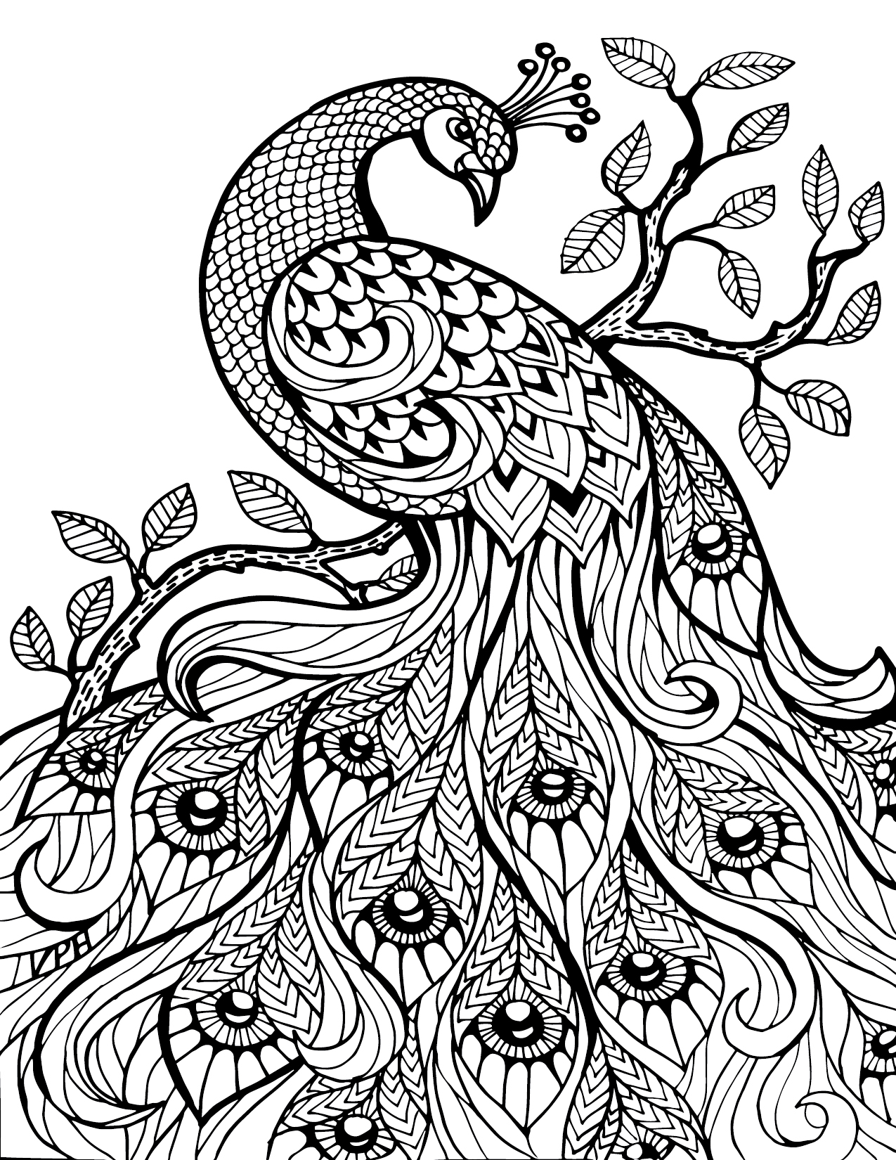 Colouring in for adults why - Peacock